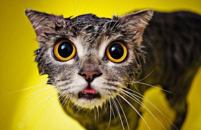 cat_mojado