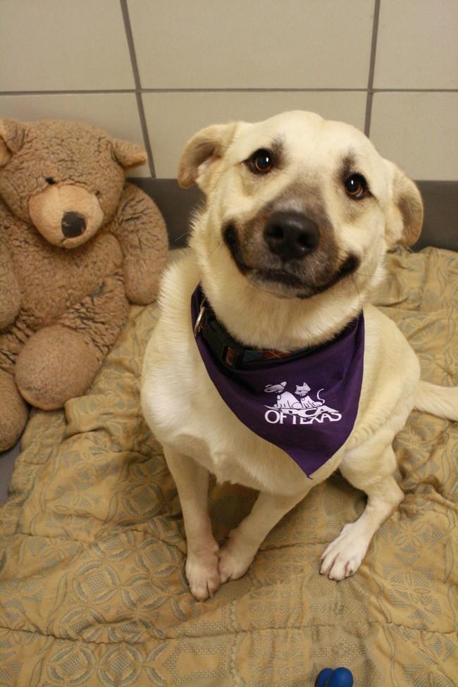 este-es-mi-mejor-amigo-y-se-llama-teddy