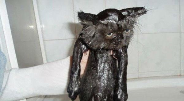gato_negro_mojado
