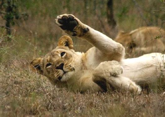 leona-saludando