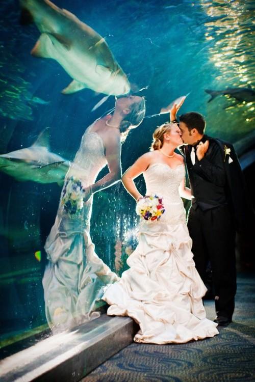 Fotografías-en-el-momento-justo-acuario