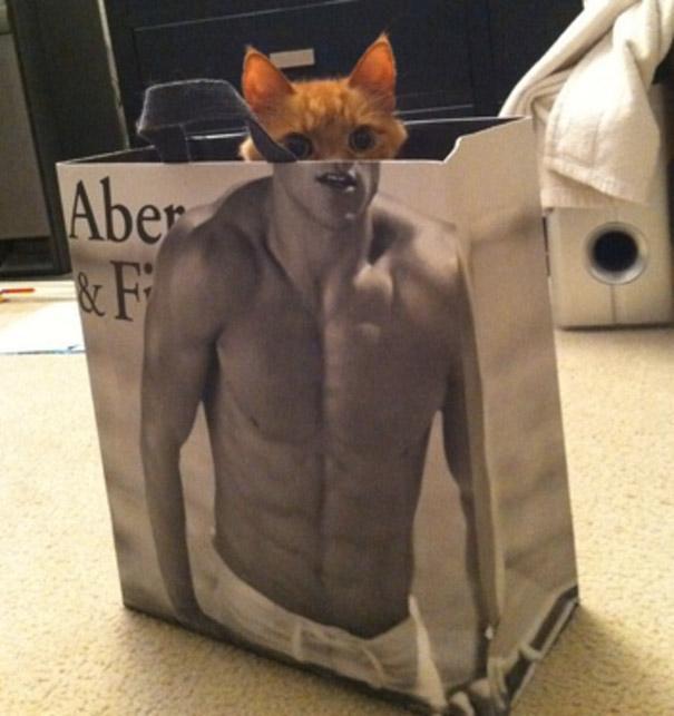 gato-bolsa-humano
