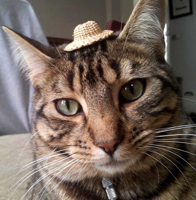 Fotos de Gatos adorables con Sombrero