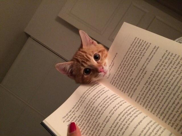 gato-mas-interesante-que-libro