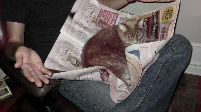 gato-periodico