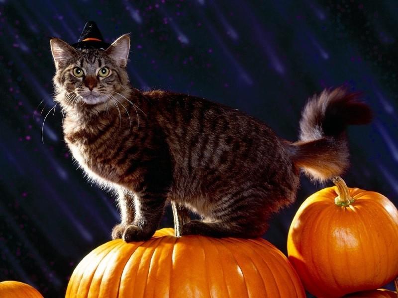 imagenes-halloween-16