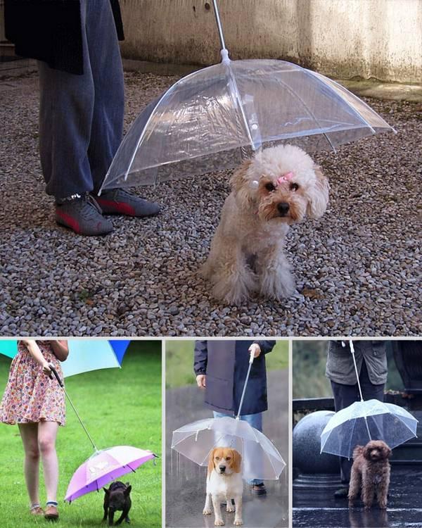 inventos-raros-paraguas-perro