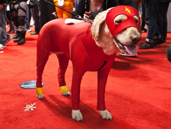 perros-disfrazados-de-supeheroes-8