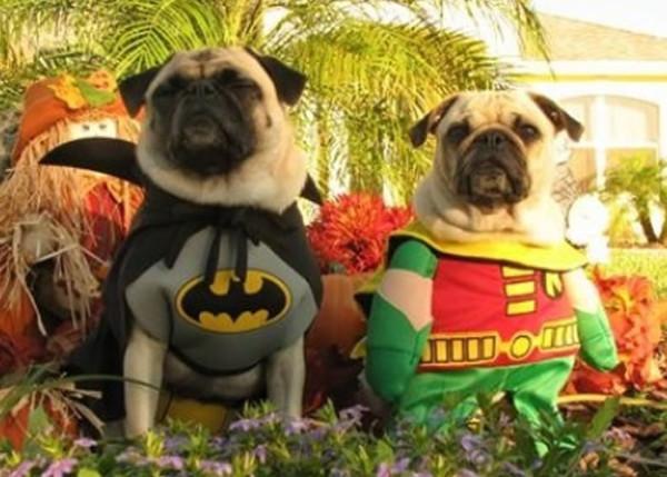 perros-disfrazados-de-superheroes-1
