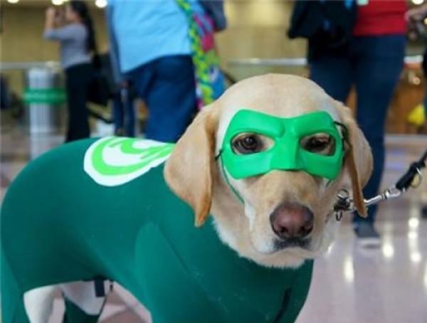 perros-disfrazados-de-superheroes-10