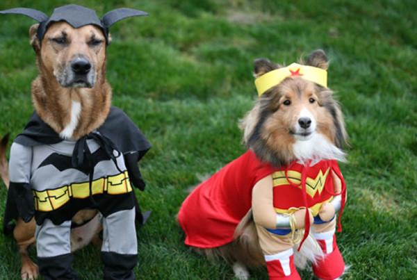 perros-disfrazados-de-superheroes-11