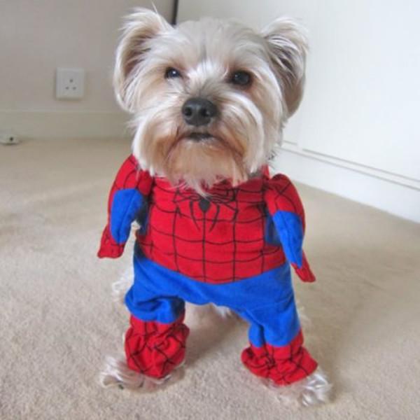 perros-disfrazados-de-superheroes-16