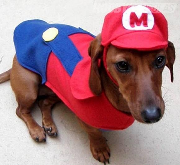 perros-disfrazados-de-superheroes-17