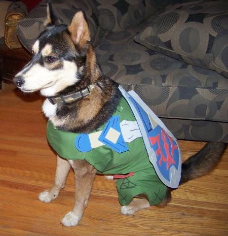 perros-disfrazados-de-superheroes-18