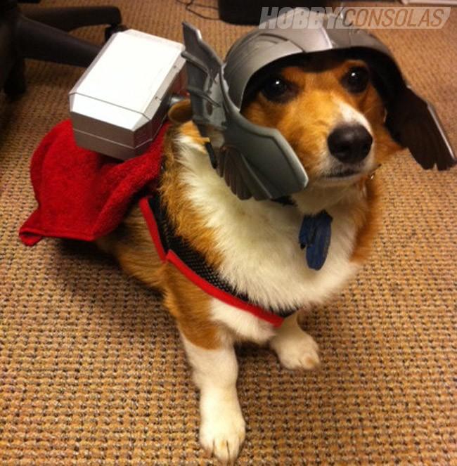 perros-disfrazados-de-superheroes-2