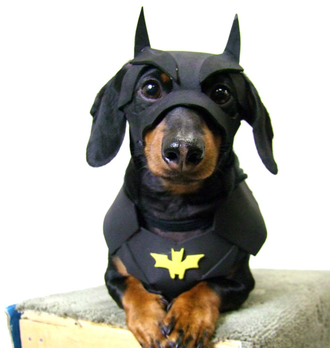 perros-disfrazados-de-superheroes-20