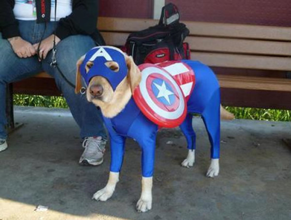 perros-disfrazados-de-superheroes-4