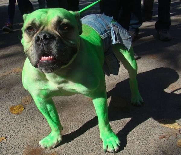 perros-disfrazados-de-superheroes-5