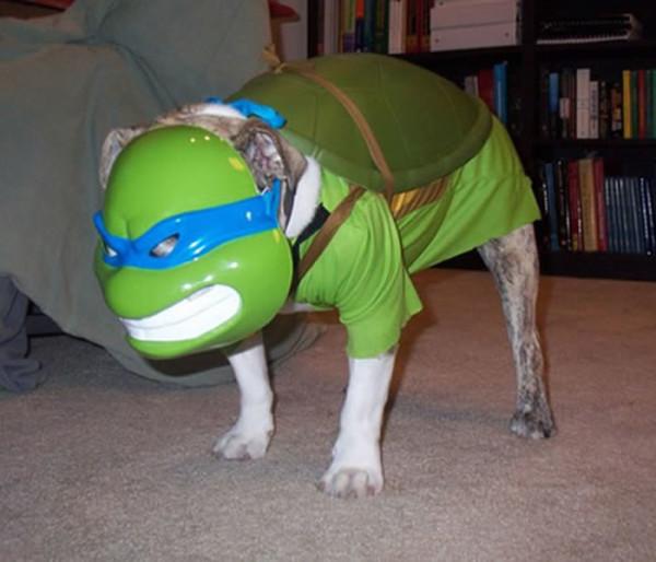 perros-disfrazados-de-superheroes-9
