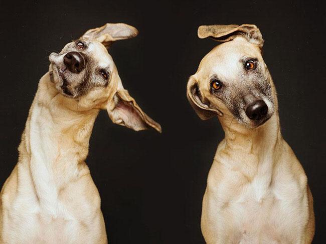 perros3