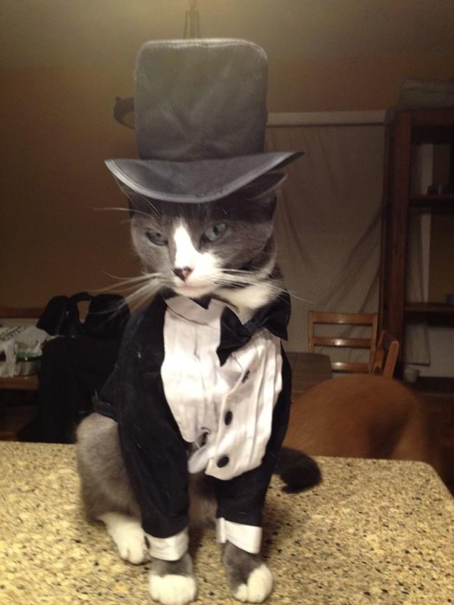 Fotos de Gatos adorabl...