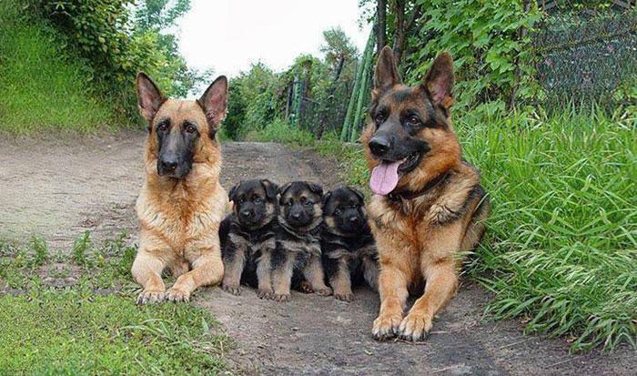 animales-en-familia-10