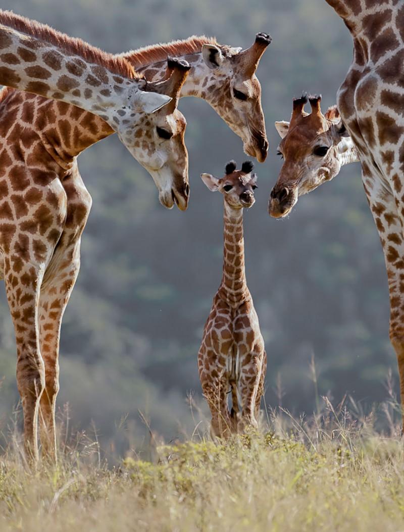 animales-en-familia-13