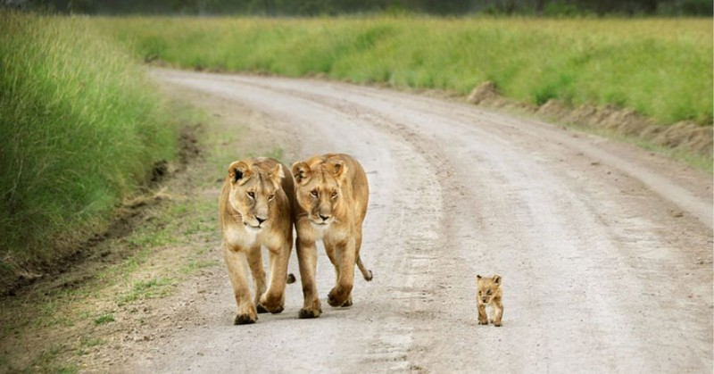 animales-en-familia-2