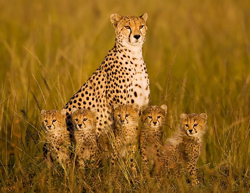 animales-en-familia-3