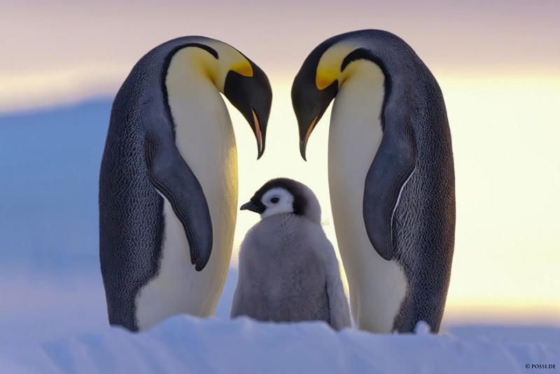 animales-en-familia-5