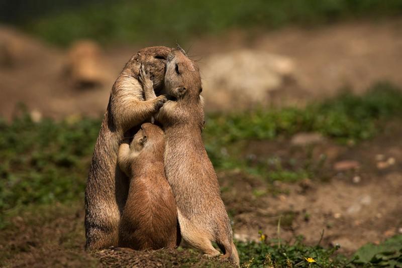animales-en-familia-6
