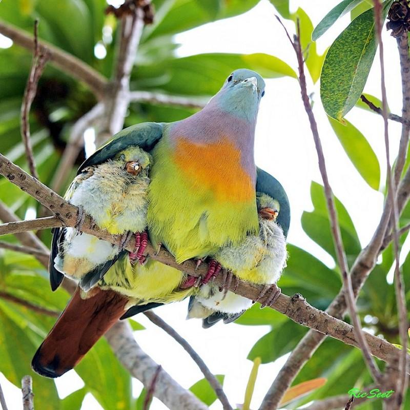 animales-en-familia-7