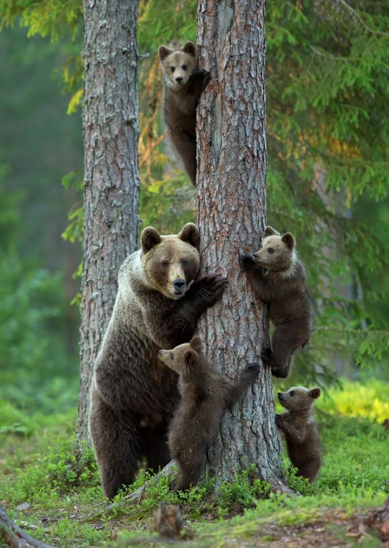 animales-en-familia-9