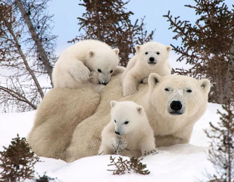 animales-en-familia
