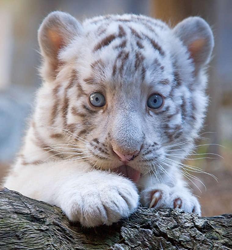 fotos-de-animales-bebes-10