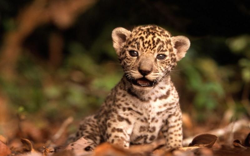 fotos-de-animales-bebes-3