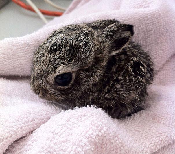 fotos-de-animales-bebes-conejo