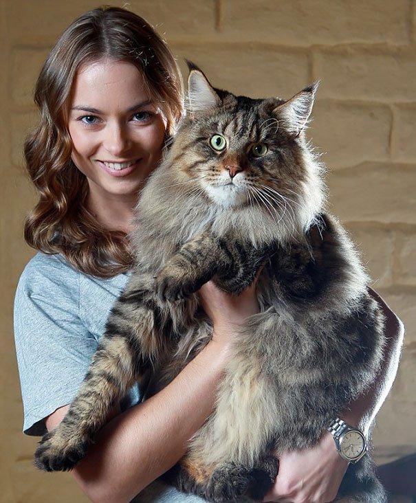 los-gatos-mas-grandes-del-mundo-11