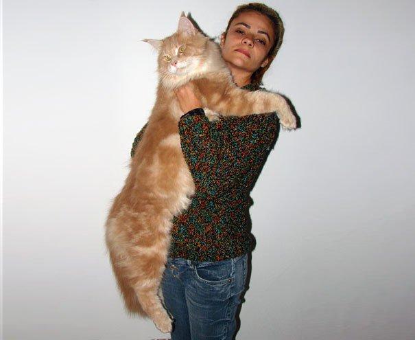 los-gatos-mas-grandes-del-mundo-12