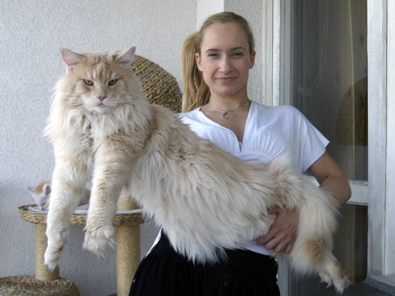 los-gatos-mas-grandes-del-mundo-3