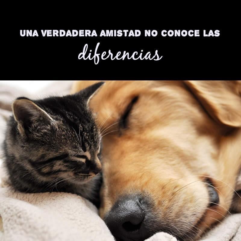 amistad-perro-gato