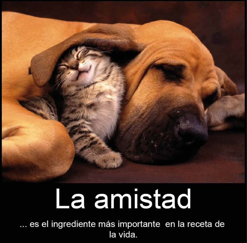 imagenes-amistad-animales