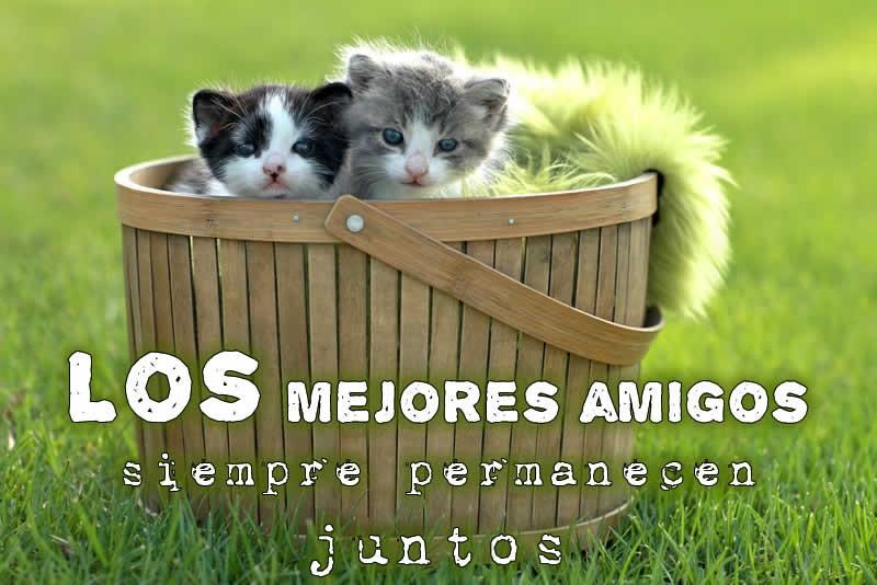 los-mejores-amigos-siempre-juntos