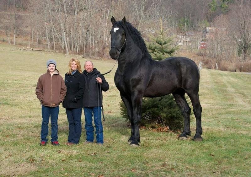 Animales mas grandes (1)
