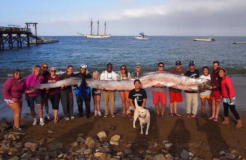 Animales mas grandes (2)