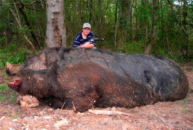 Animales mas grandes (7)