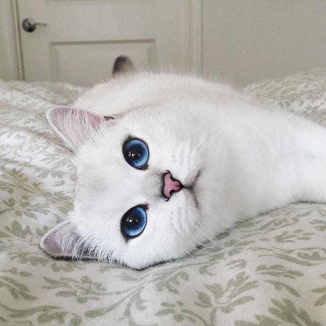 coby el gato mas guapo de mundo 03