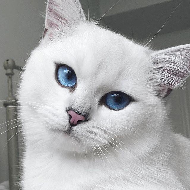 coby el gato mas guapo de mundo 04