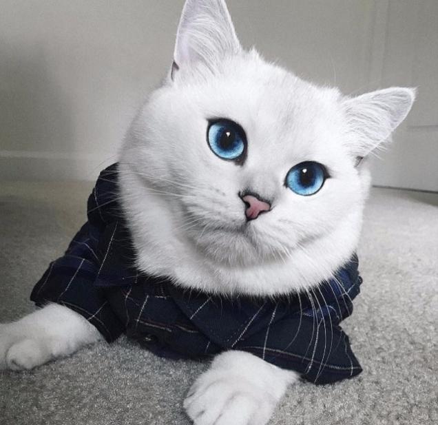coby el gato mas guapo de mundo 06