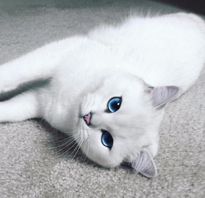 coby el gato mas guapo de mundo 07